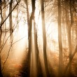 Autumn forest with lights — Stock Photo #54018299