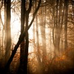 foresta d'autunno con luci — Foto Stock #54018313