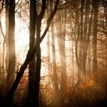 Осенний лес с огнями — Стоковое фото #54018313