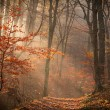 Autumn forest with lights — Stock Photo #54018329