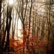 Autumn forest with lights — Stock Photo #54018353