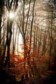 Autumn forest with lights — Stock Photo