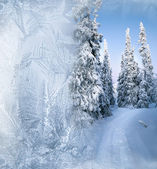 Arctic forest in winter — Stock Photo
