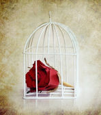 Rose in the white cage — Foto Stock