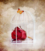 Prisoner rose and butterfly — Stock Photo