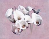Painted calla bouquet — Stock Photo
