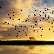 Sunrise with flock of birds — Stock Photo #54249049