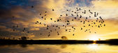 Sunrise with flock of birds — Stock Photo