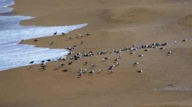 Seagulls Sitting on the Beach — Wideo stockowe