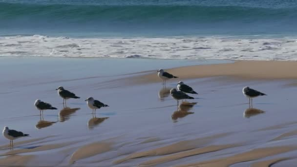 Sentado en la playa de las gaviotas — Vídeo de stock