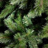 Green branches of fir-tree — Stock Photo