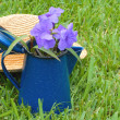 Flowers in a can on the lawn — Stock Photo #79242492