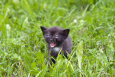 Small kitten in the grass — Stock Photo