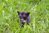 маленький котенок в траве — Стоковое фото