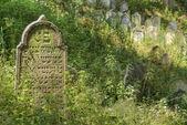Jewish Cemetery - Nove Sedliste — Stock Photo