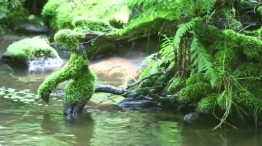 Roots In The Water — Stock Video