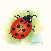 Ladybird watercolour — Stock Vector
