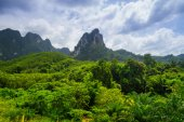 Rainforest of Khao Sok National Park — Stock Photo