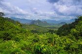 Rainforest of Khao Sok National Park — Stock Photo
