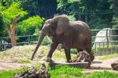 Elefante africano — Foto de Stock