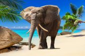 African elephanton the beach — Stock Photo