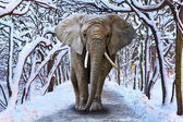 Elephant walking in snowy park — Stock Photo