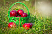Red apples in the basket — Stock Photo