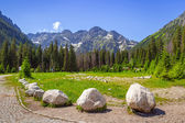 Wlosienica meadow in Tatra mountain — Stock Photo