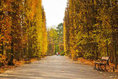 Autumnal alley in the park — Stock Photo