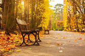 Empty bench in the autumnal park — Stock Photo