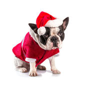 French bulldog in santa costume for Christmas — Foto de Stock