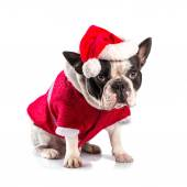 French bulldog in santa costume for Christmas — Stock Photo