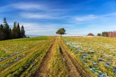 Idyllic meadow with path and single tree — Stockfoto
