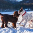 Two dogs playing on the snow — Stock Photo #60326953