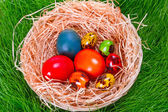 Colorful painted easter eggs in the nest — Stock Photo