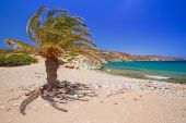 Cretan Date palm tree on idyllic Vai Beach — Stock Photo