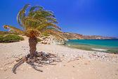 Palmera datilera cretense en vai idílica playa — Foto de Stock
