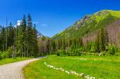 Beautiful scenery of the trail in Tatra mountains — Stock Photo