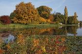 Autumn in the Park Woerlitzer — Stock Photo