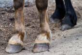 Rear hooves horse — Stock Photo