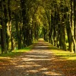 Pathway through the autumn forest — Stock Photo #58008393