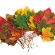Colorful autumn fall leaves maple isolated on white background — Stock Photo #58158925