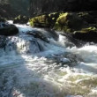 Wild river with rocks covered with moss — Stock Video #67871065