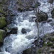 Wild river with rocks covered with moss — Stock Video #67871085