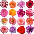 The Big Set of roses blooms — Stok fotoğraf #55328439