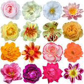 Set of colorful seasonal blooms  — Stock Photo