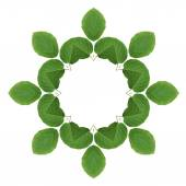 Pattern of  green leaves isolated on white background  — Foto de Stock