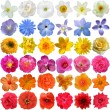 Big Selection of Various Flowers Isolated on White Background — Stock Photo #61886907