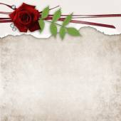 Card with rose and old grunge paper — Stock Photo