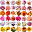 Big Selection of Various Flowers Isolated on White Background — Stock Photo #75662355